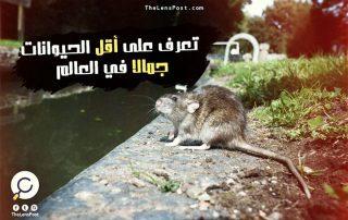 تعرف على أقل الحيوانات جمالا في العالم