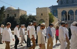 25 مستوطنًا إسرائيليًّا يقتحمون المسجد الأقصى
