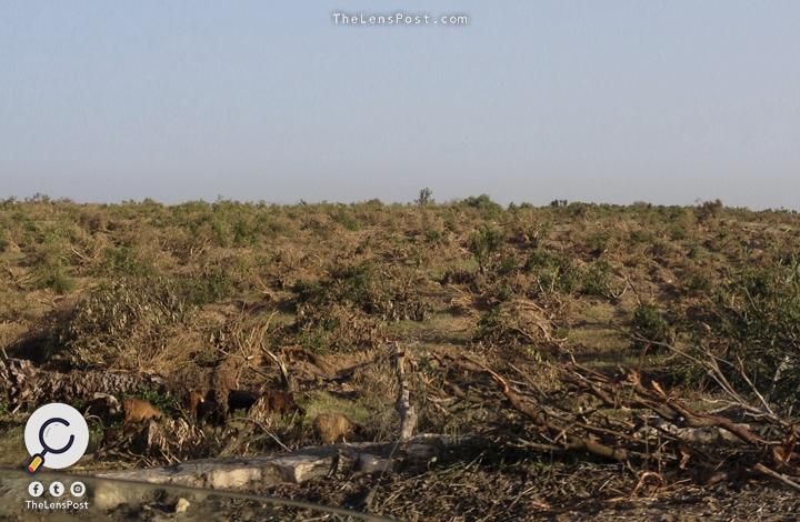 قصف مدفعي وتجريف لأشجار الزيتون بسيناء