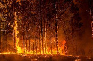 السلطات-الأسترالية-تأمر-بإخلاء-مدن-محاصرة-بالحرائق-قبل-موجة-حرّ-جديدة-السبت