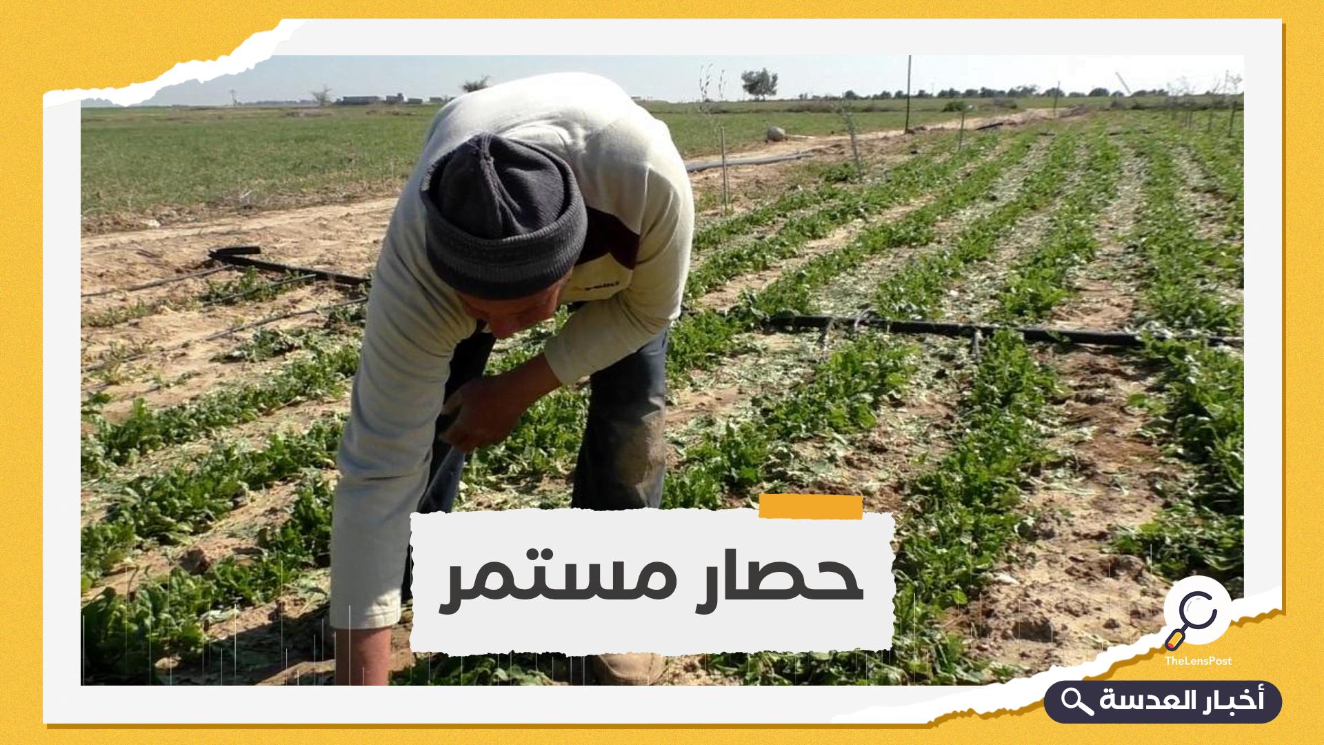الاحتلال الصهيوني يكبد مزارعي غزة خسائر فادحة بإتلاف محاصيلهم الزراعية ( حصار مستمر )