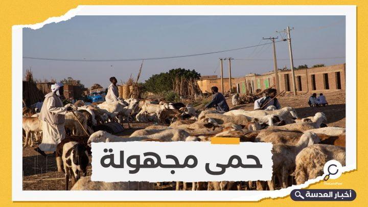 انهيار صادرات الماشية في السودان خلال 2020 .. ما علاقة السعودية؟