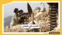 الجيش اليمني يتمكن من تحرير مواقع عسكرية من جماعة الحوثي